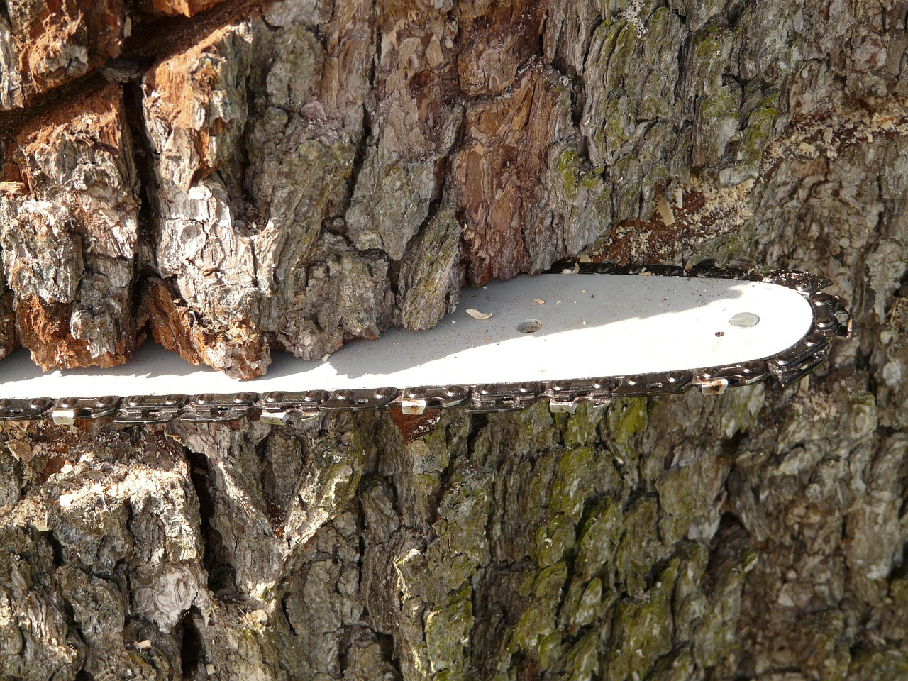 Make Tree Removal Easy with These Fantastic Basic Tips for Every Homeowner