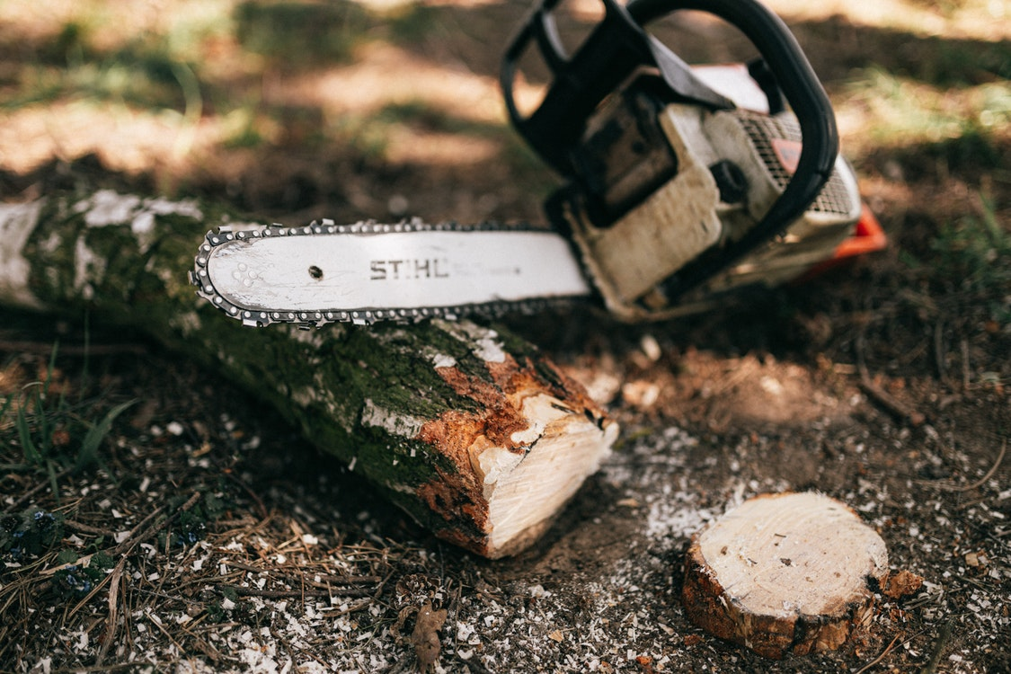 The Various Responsibilities and Duties of a Skilled Arborist and Why You Should Hire One